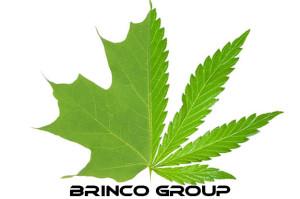 brinco logo 1