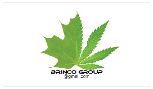 Brinco card Back